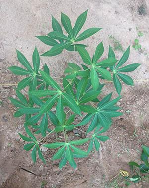 whole plant_2 copy